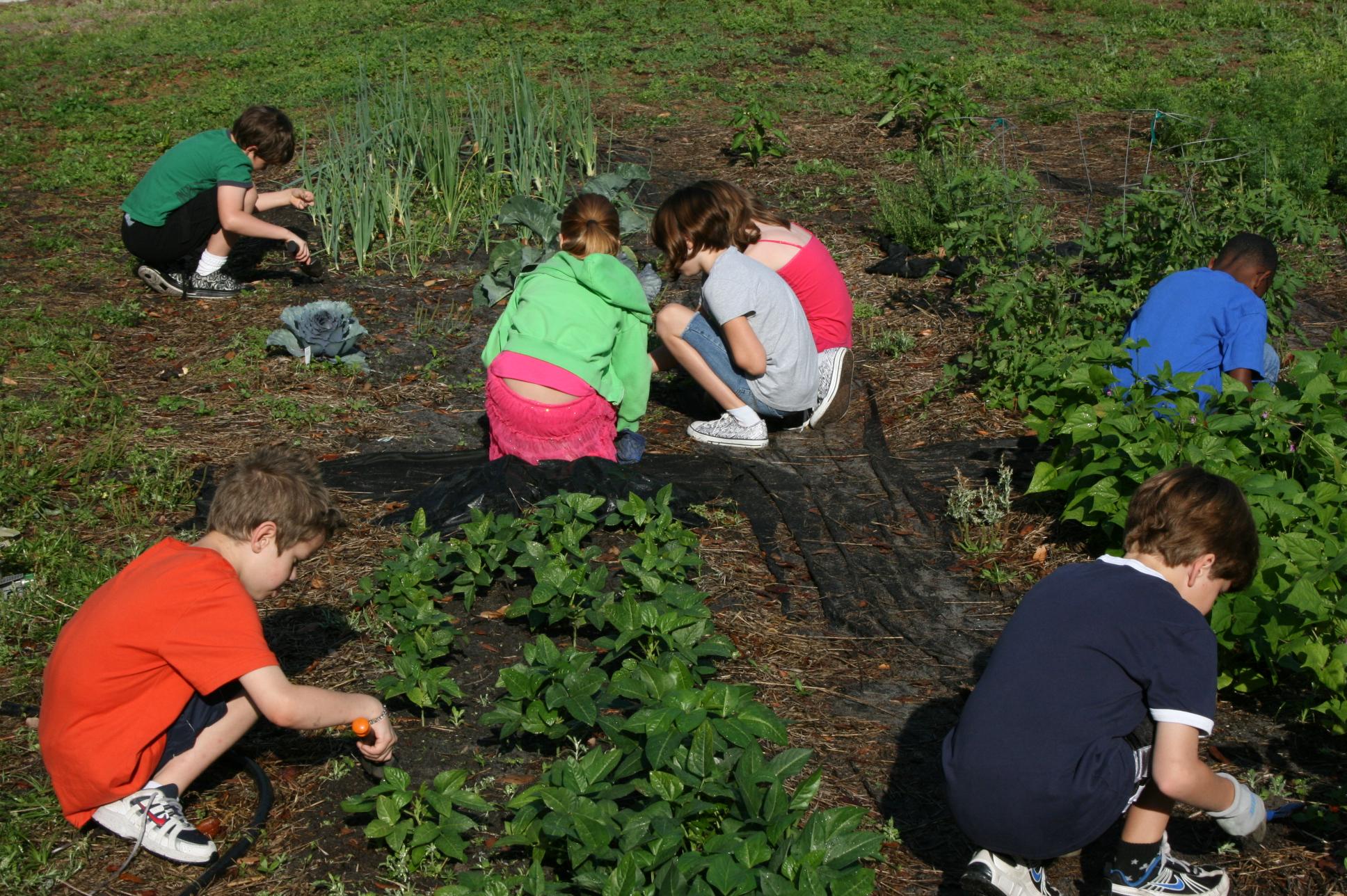 School garden follow the kids as they grow - Weeding garden make work easier ...