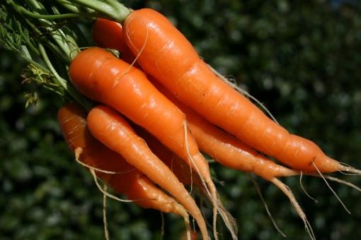 carrots-anyone