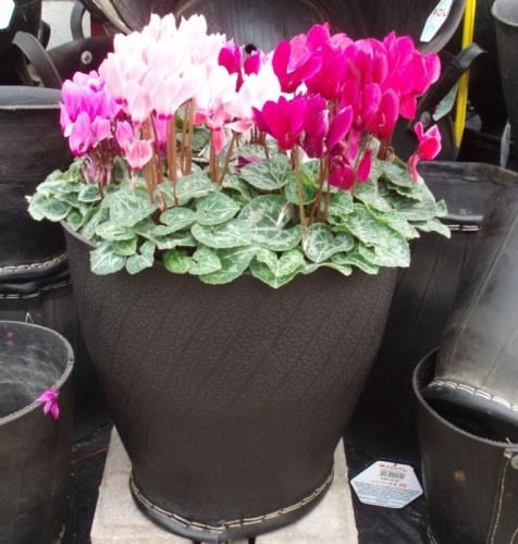 Recicle las latas # 10 en las ollas de jardín | PreparaciónMama