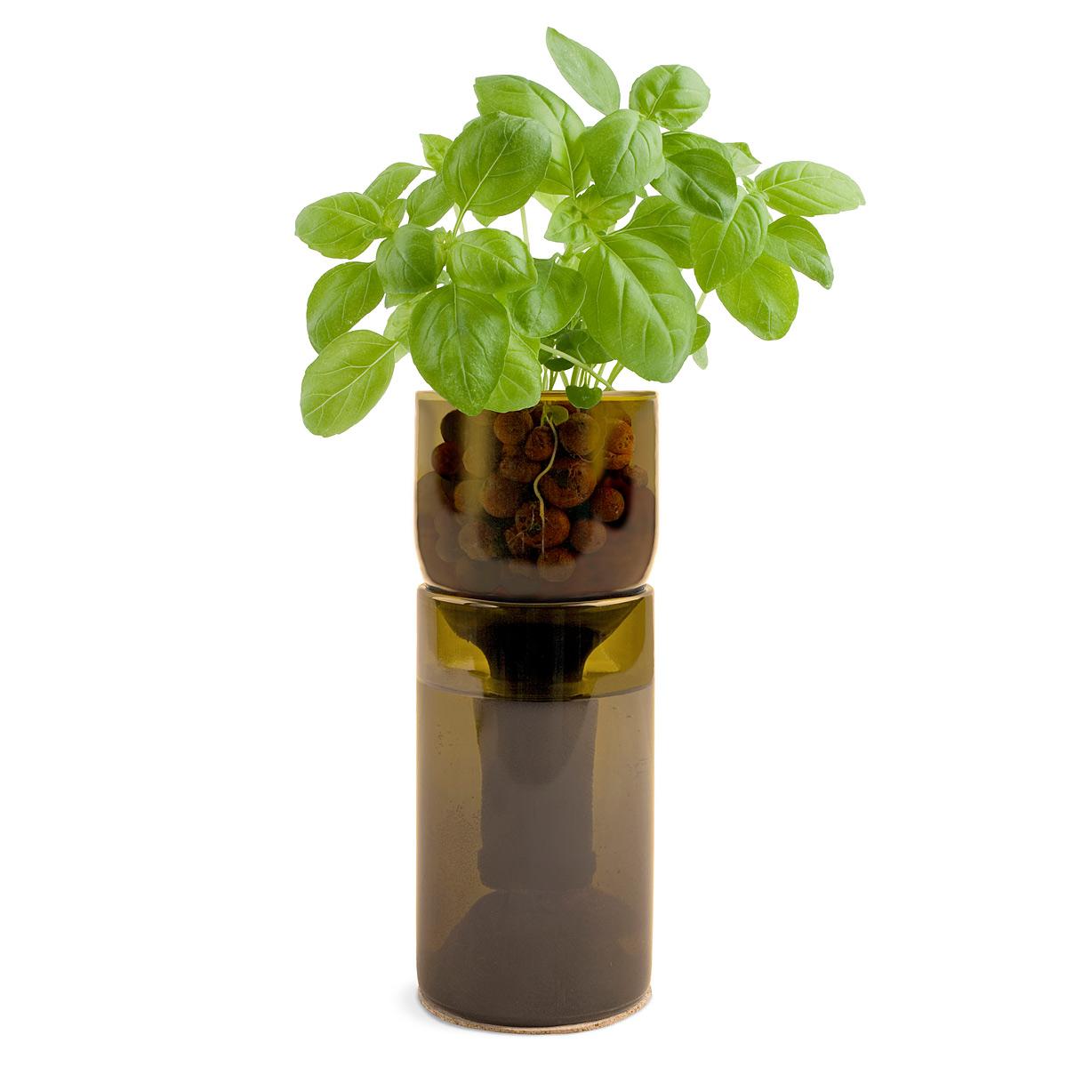 Bottle Herb Garden & amp; # 8211; un Proyecto de Reciclaje .: 7 Pasos (con Fotos)