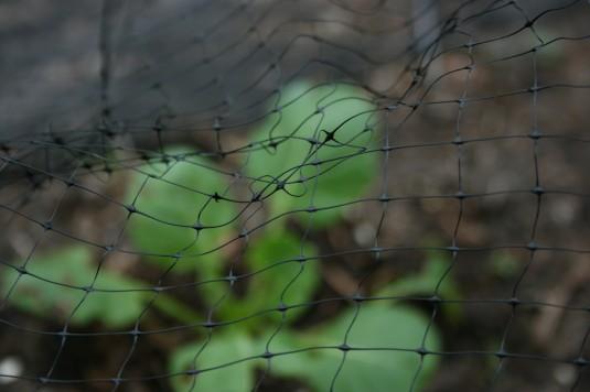 Brussels beneath netting