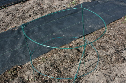 round flimsy tomato cage