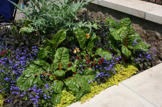 Edible Colorado landscaping