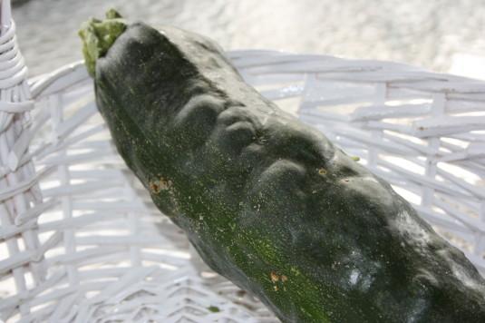 lumpy zucchini