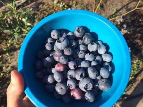 big bowl of blueberries