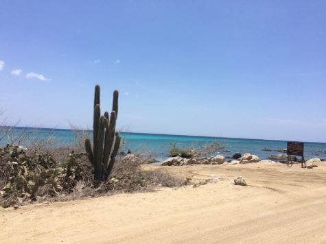 Aruba beach cactus