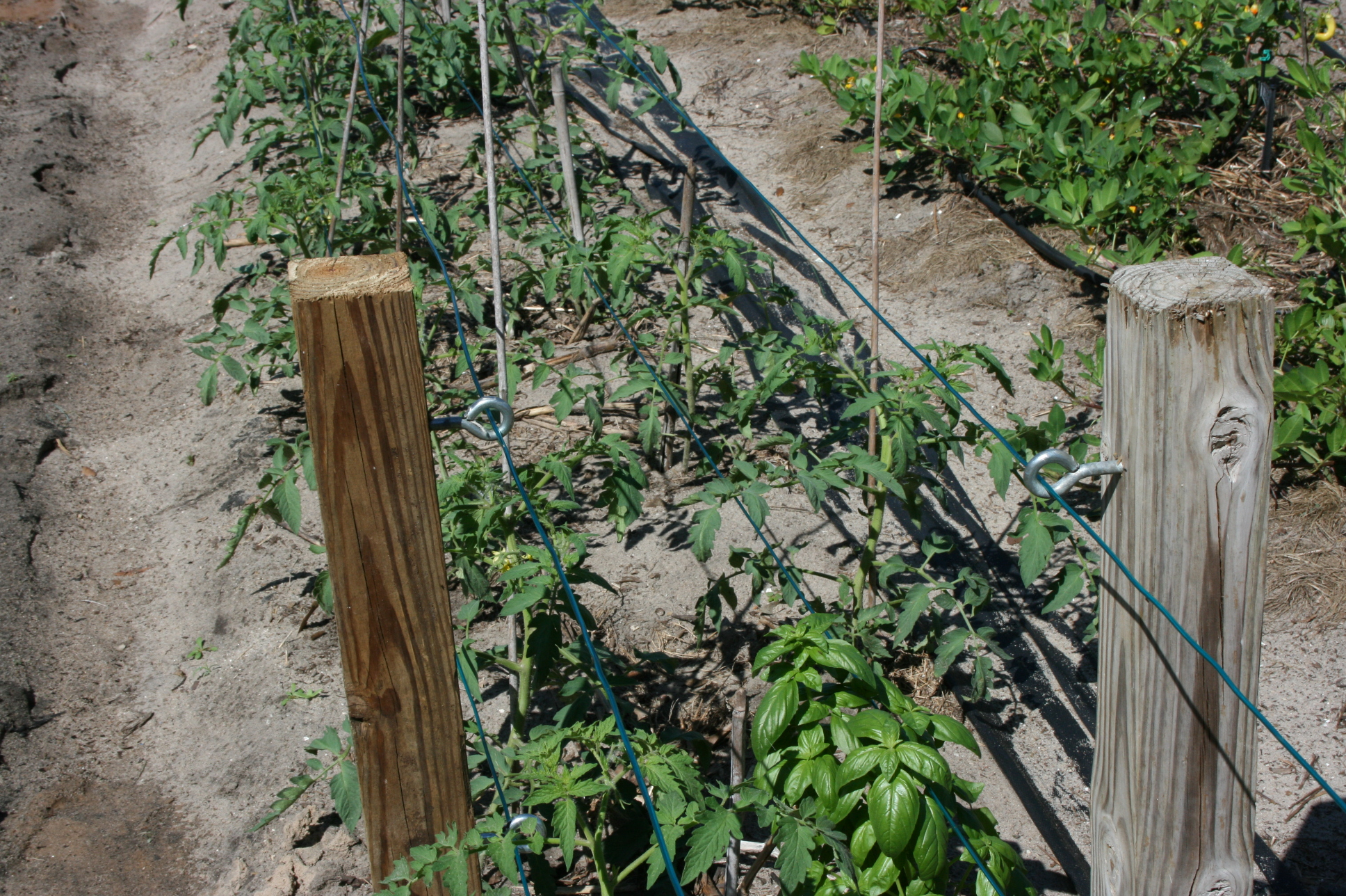 tomato-stakes-and-cables